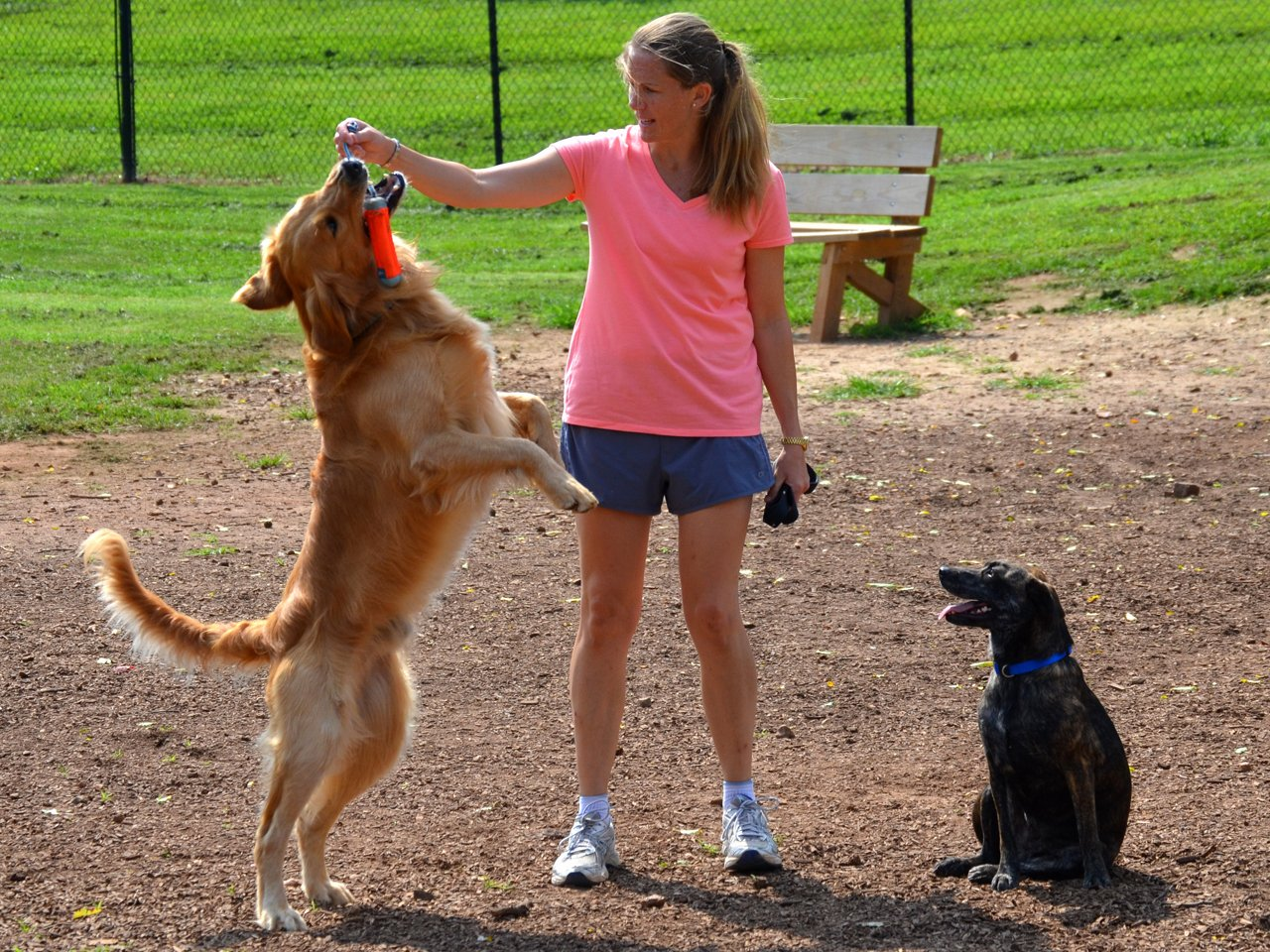 Frank Boone Dog Park City Of Kennesaw