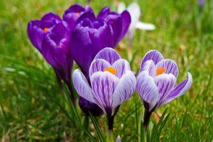 Spring Plant Sale @ Smith-Gilbert Gardens