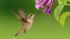 Hummingbird Banding Event @ Smith-Gilbert Gardens